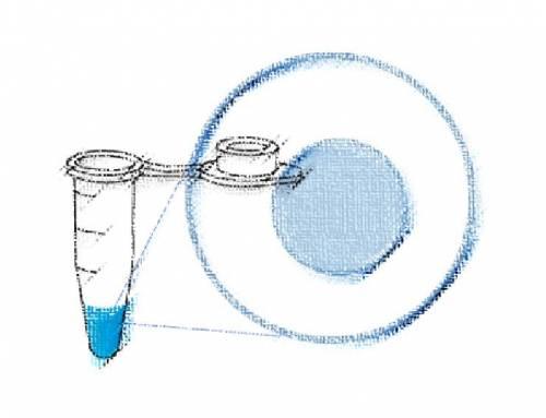 前言: 踏出單顆細胞基因組分析的第一步 – 漫談單細胞全基因組定序分析